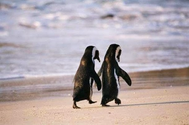 http://funkidos.com/pictures-world/wild-life/animals-on-the-beach