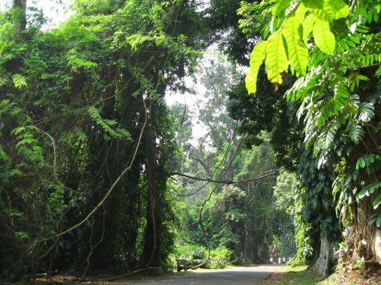 Objek Wisata Kebun Raya Bogor 3