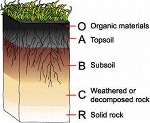 Plant a seed watch it grow improve your soil organically for What are the different layers of soil