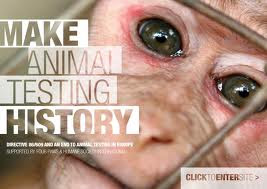 animal testing is bad Is animal testing bad science the only way not beneficial excess verbiage assurance appeal to pity merely verbal dispute-argument between people in favor and people.