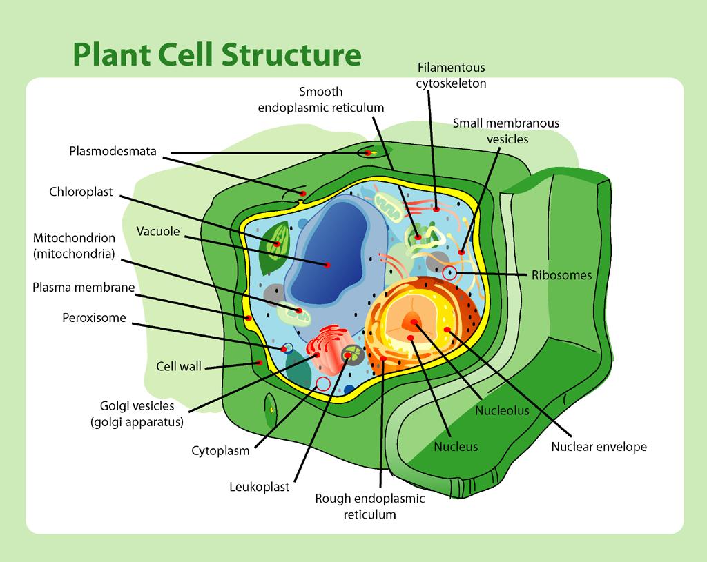 Biologi dalam beberapa bidang ilmu kehidupan manfaat ilmu biologi