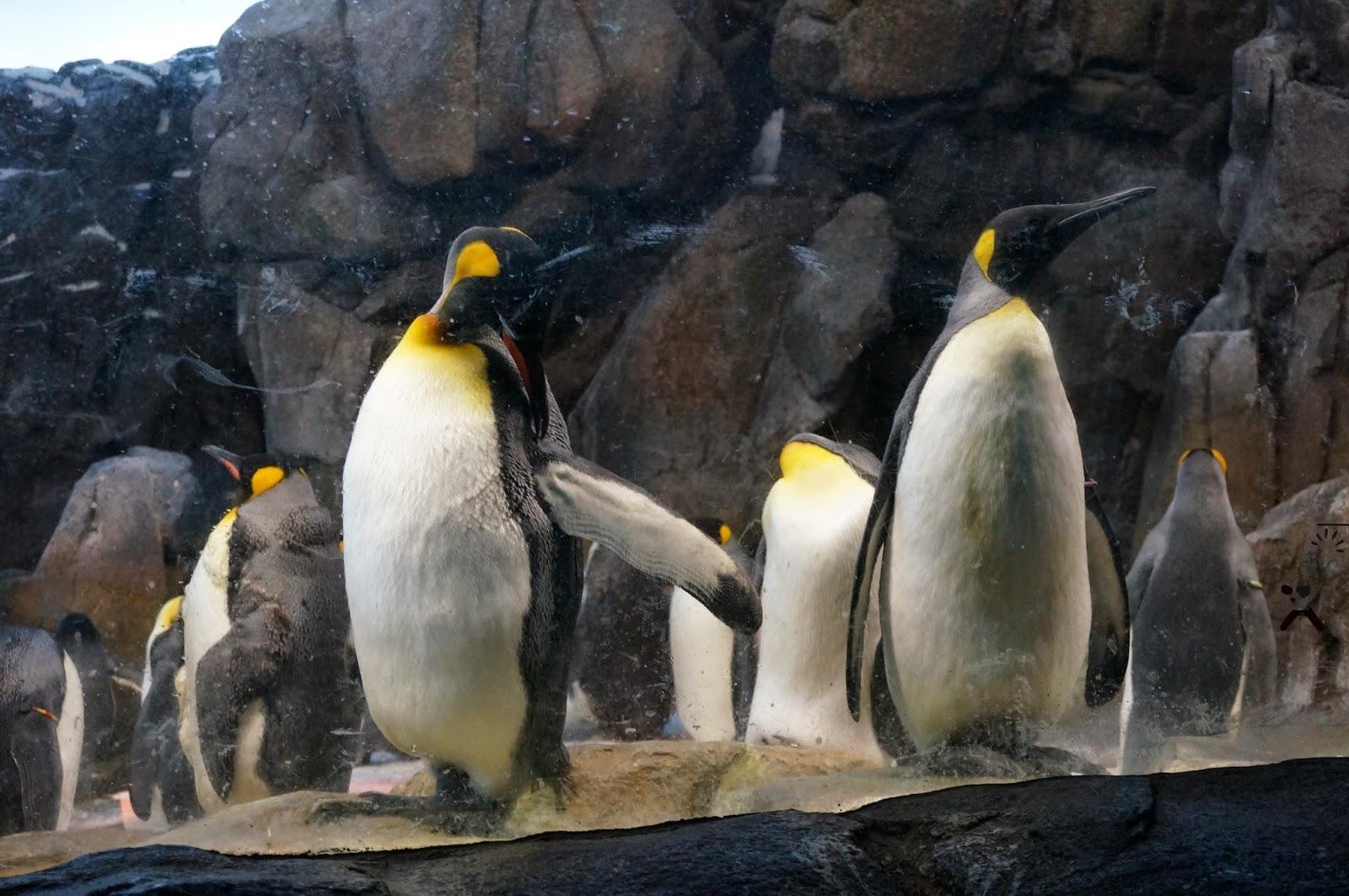 årskort til ålborg zoo par søger fyr