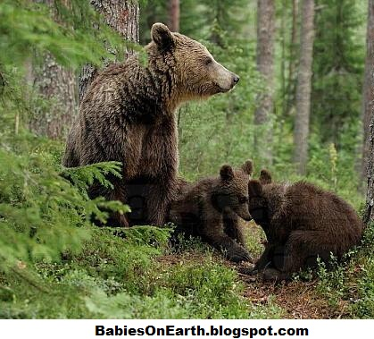 Newborn brown bear - photo#22