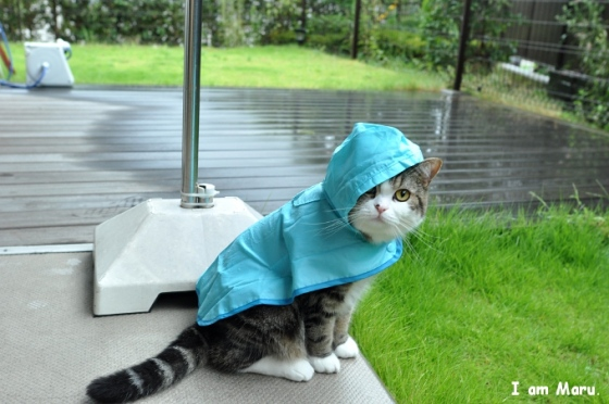 """the cat in the rain 2 thoughts on """"""""cat in the rain"""" — ernest hemingway"""" what makes a short story great 
