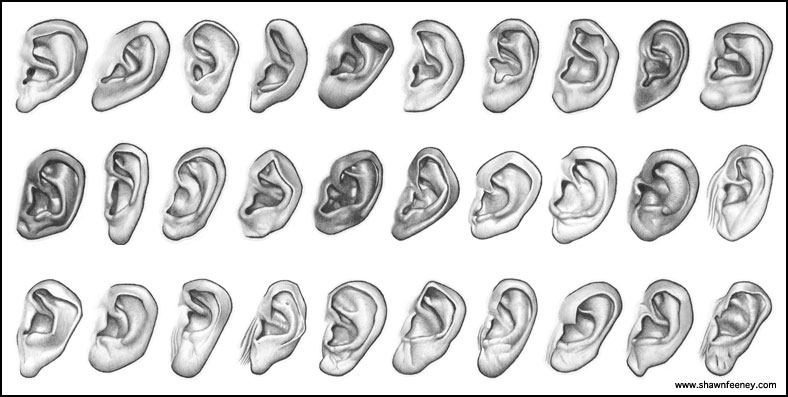the different benefits of having a pair of ears Such complexity may explain why so many different tinnitus where they link to a pair of regions called the an ear-nose-and-throat doctor at thomas.
