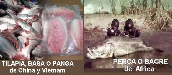 El blog de karmenlidia for Criadero de pescado tilapia