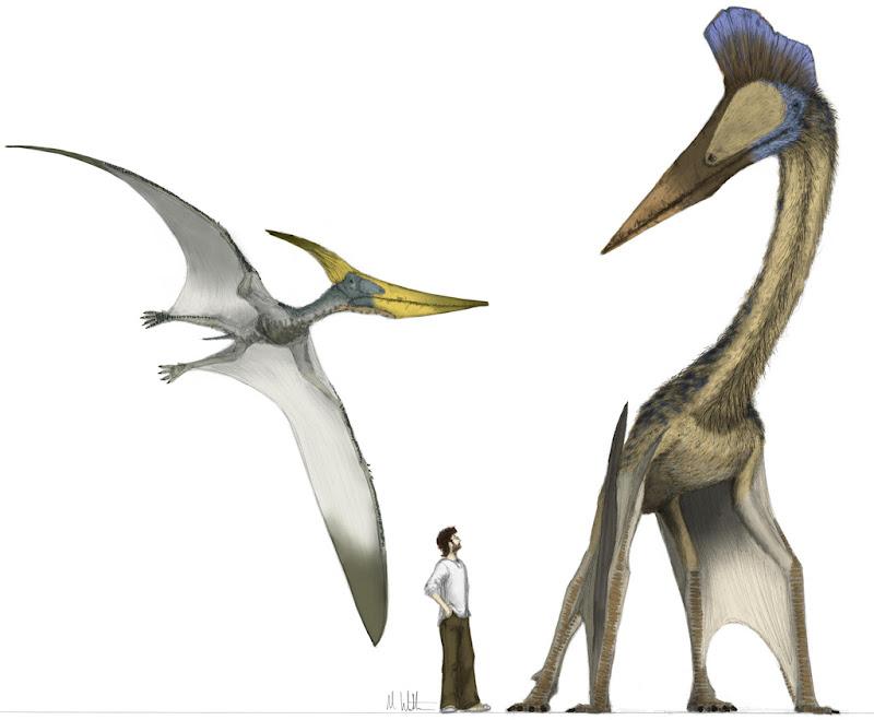Hatzegopteryx Size Species New to Science...