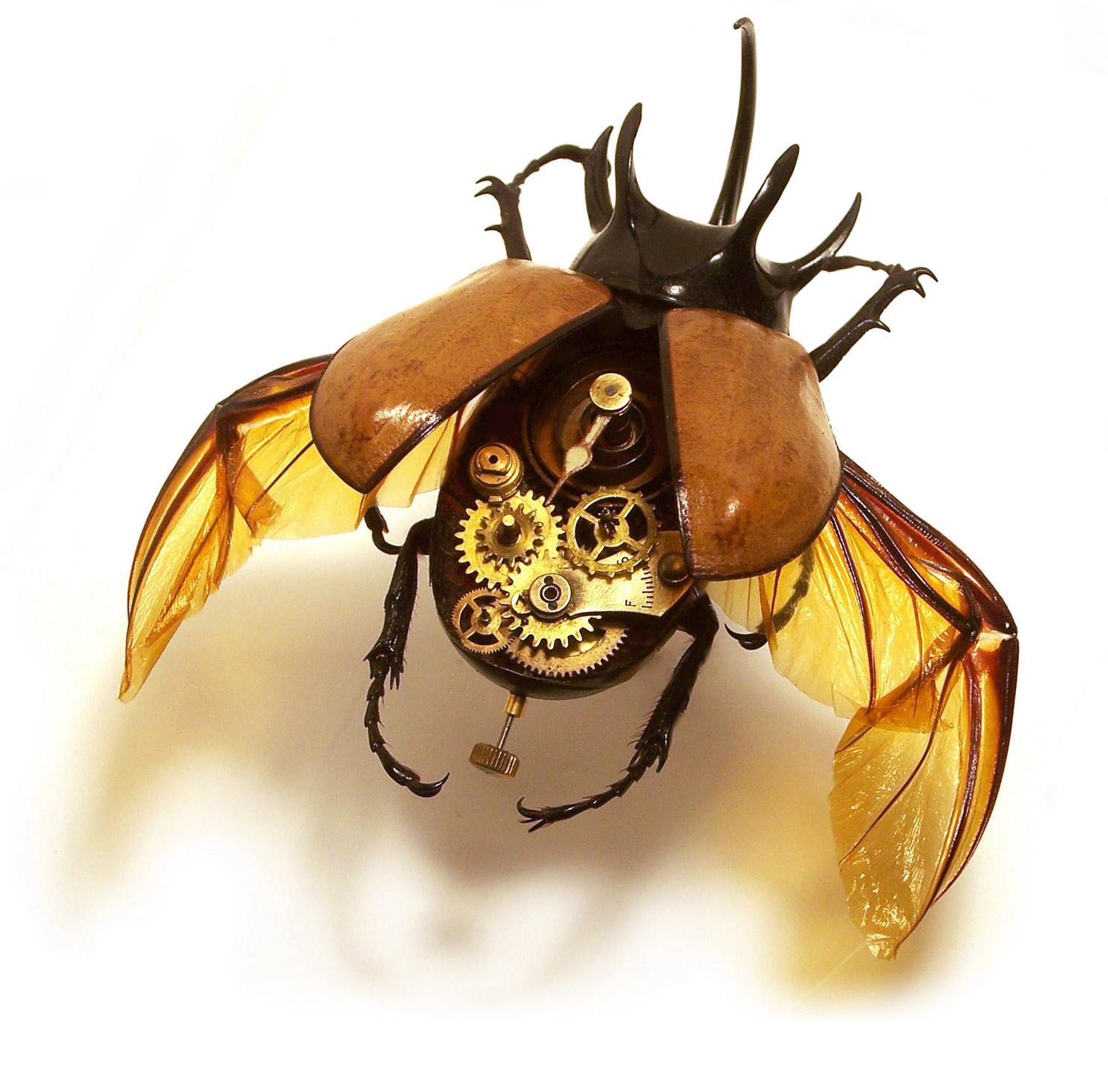 http://3.bp.blogspot.com/-fPCZjpMf7Mg/TTrk91PoLYI/AAAAAAAAACM/bONdyvBajpI/s1600/insect_lab_photo.jpg