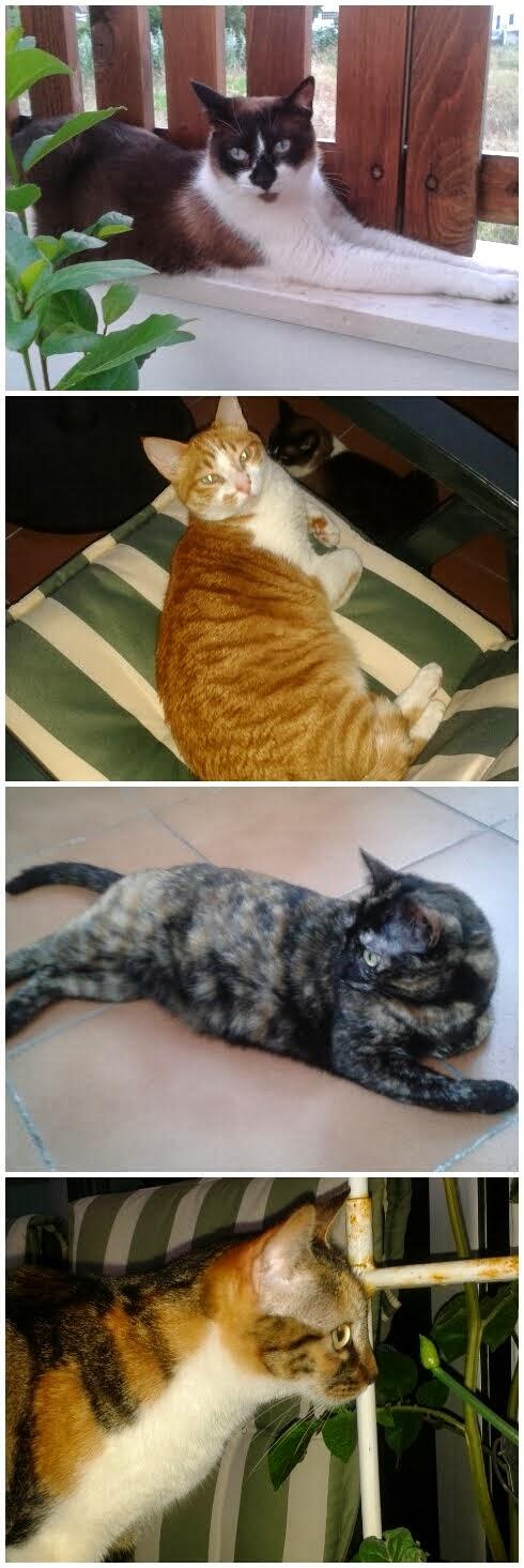 Os Miaus da Cenourit@...