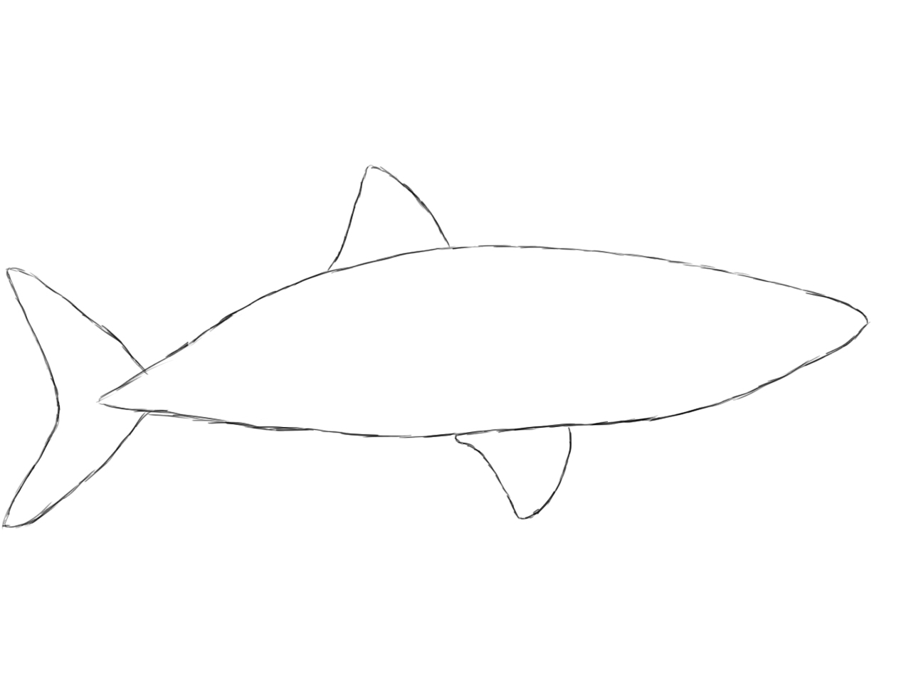 How to draw a shark draw central