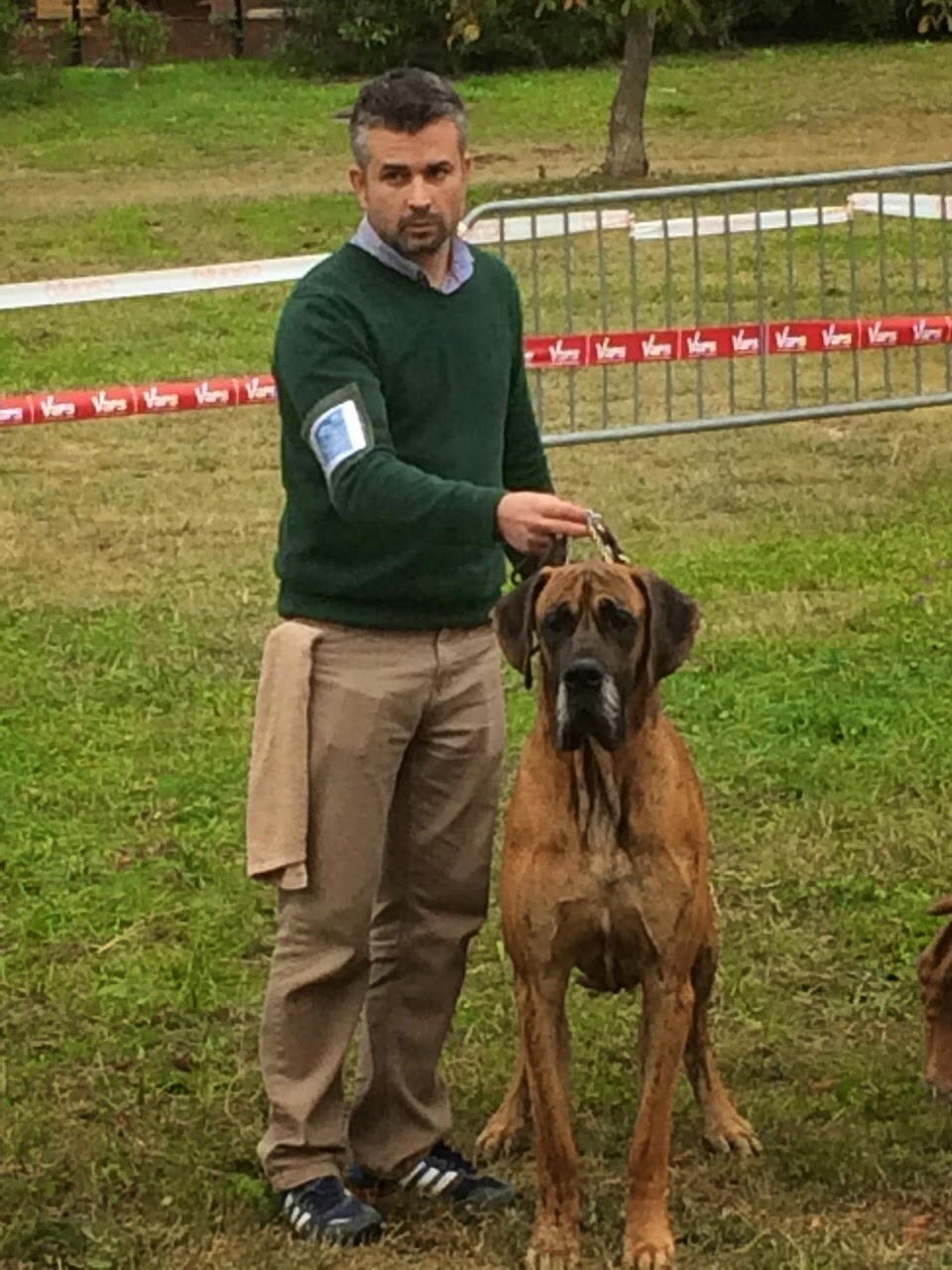 Cedda, Doggen Club de France, Dogo aleman atigrado