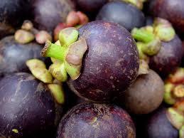 buah manggis untuk memperbesar payudara