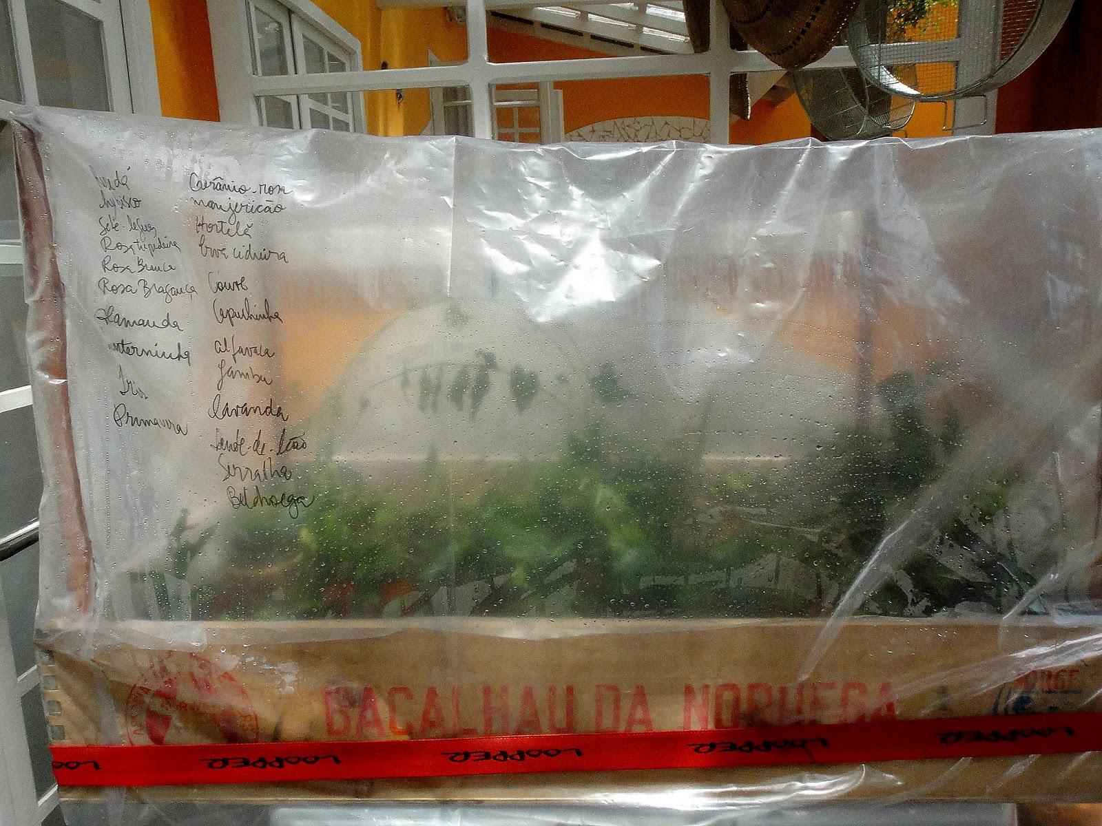 Arvores Frutíferas Em Vasos Aprenda A Criar árvores Frutíferas Em