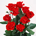 Beautiful Red Roses images photos