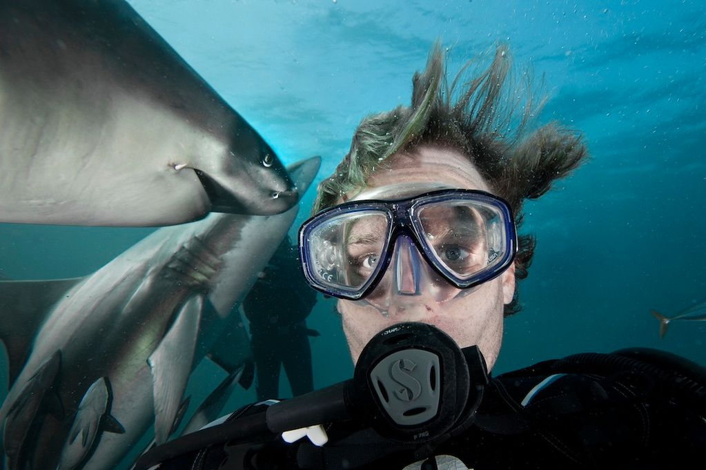 Hombre buceando con tiburones