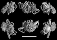 http://sciencythoughts.blogspot.co.uk/2012/12/goblin-spiders-from-cretaceous-amber.html