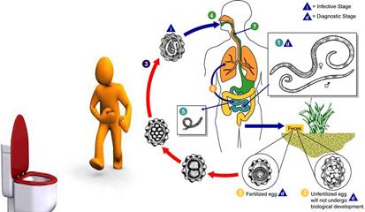 Cara Penularan Penyakit Diare