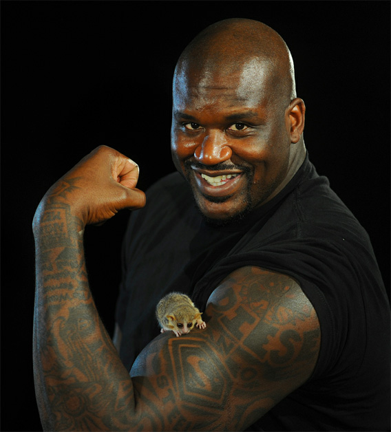 Shaquille o neal profile and images pictures 2012 its for Shaquille o neal tattoos