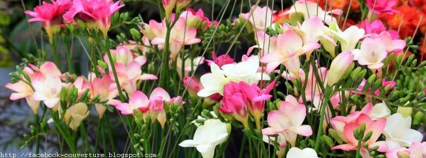 Jolie photo de couverture facebook fleur