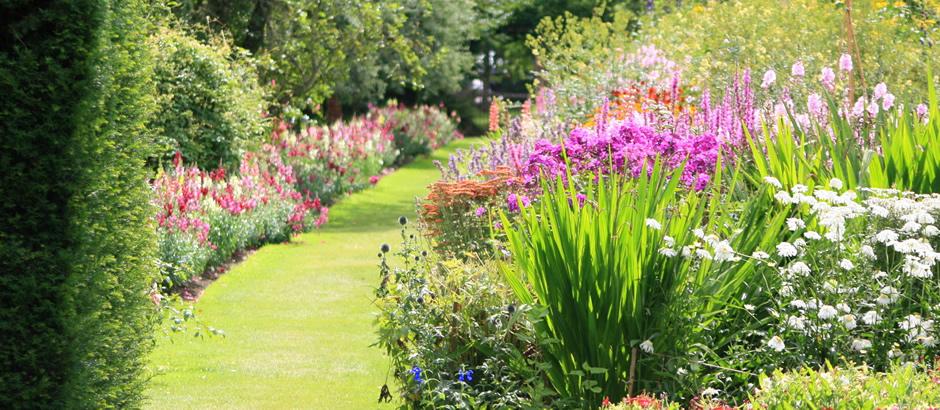 Piante e fiori piante per balconi terrazzi e giardini in for Piante e fiori