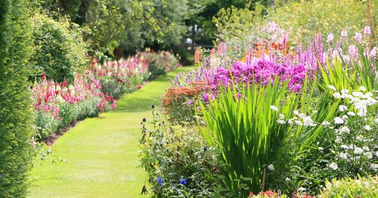 Piante e fiori piante per balconi terrazzi e giardini in - Piante per terrazzi ...