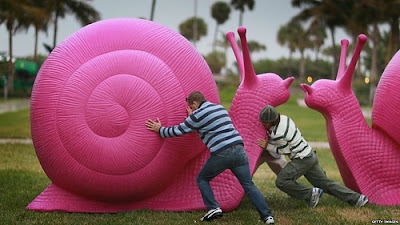 giant pink snails