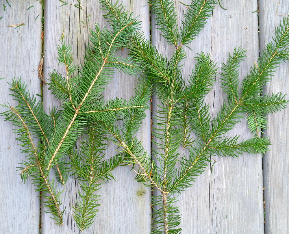 Crafts with spruce boughs