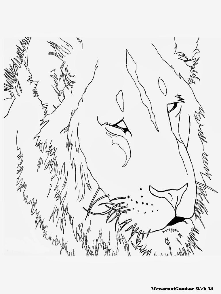 mewarnai gambar kepala, wajah dan singa