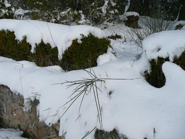 Neve, campagna toscana, colline, Ponsacco, Casciana Terme, Villa San Marco, Chientina