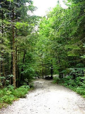 camino a neuchwanstein