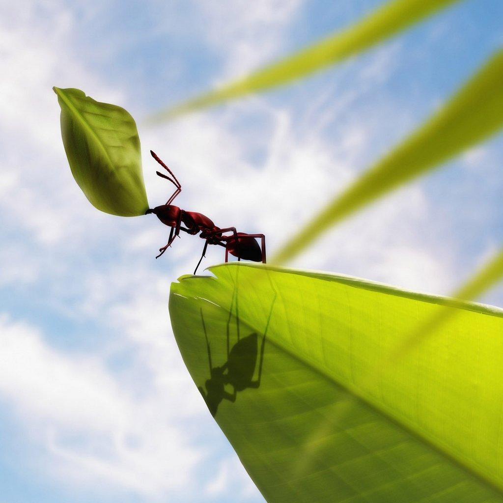 Cute Ants Macro Phot