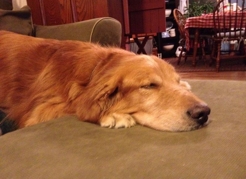 The Writer S Dog Floppy Bendy Slinky Dog Brooks