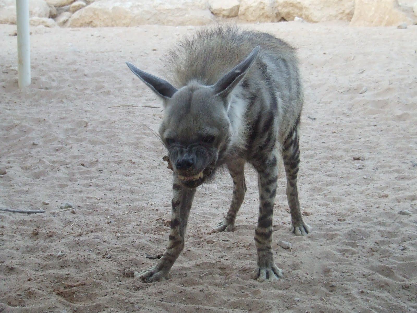 Sand Cast Dog Labrador With Ball Ebay Uk