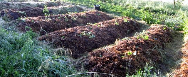 realizzare orto naturale