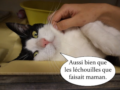 Beau chat cartoon qui se fait caresser.
