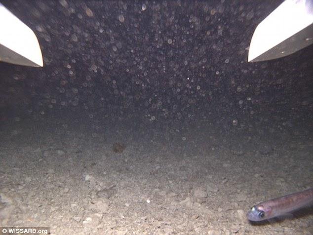 ظهور سمكة على الكاميرا