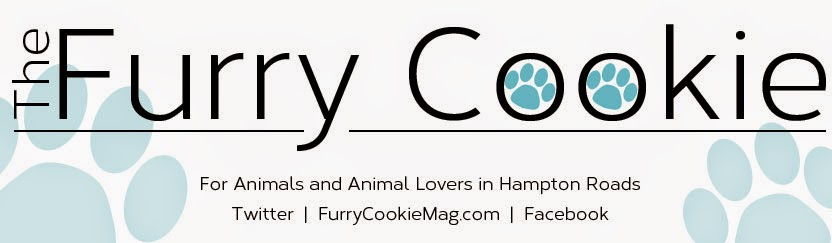 The Furry Cookie