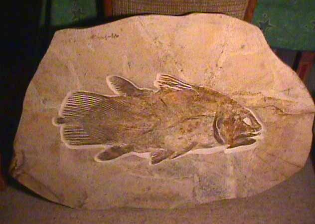 coelacanth fossil
