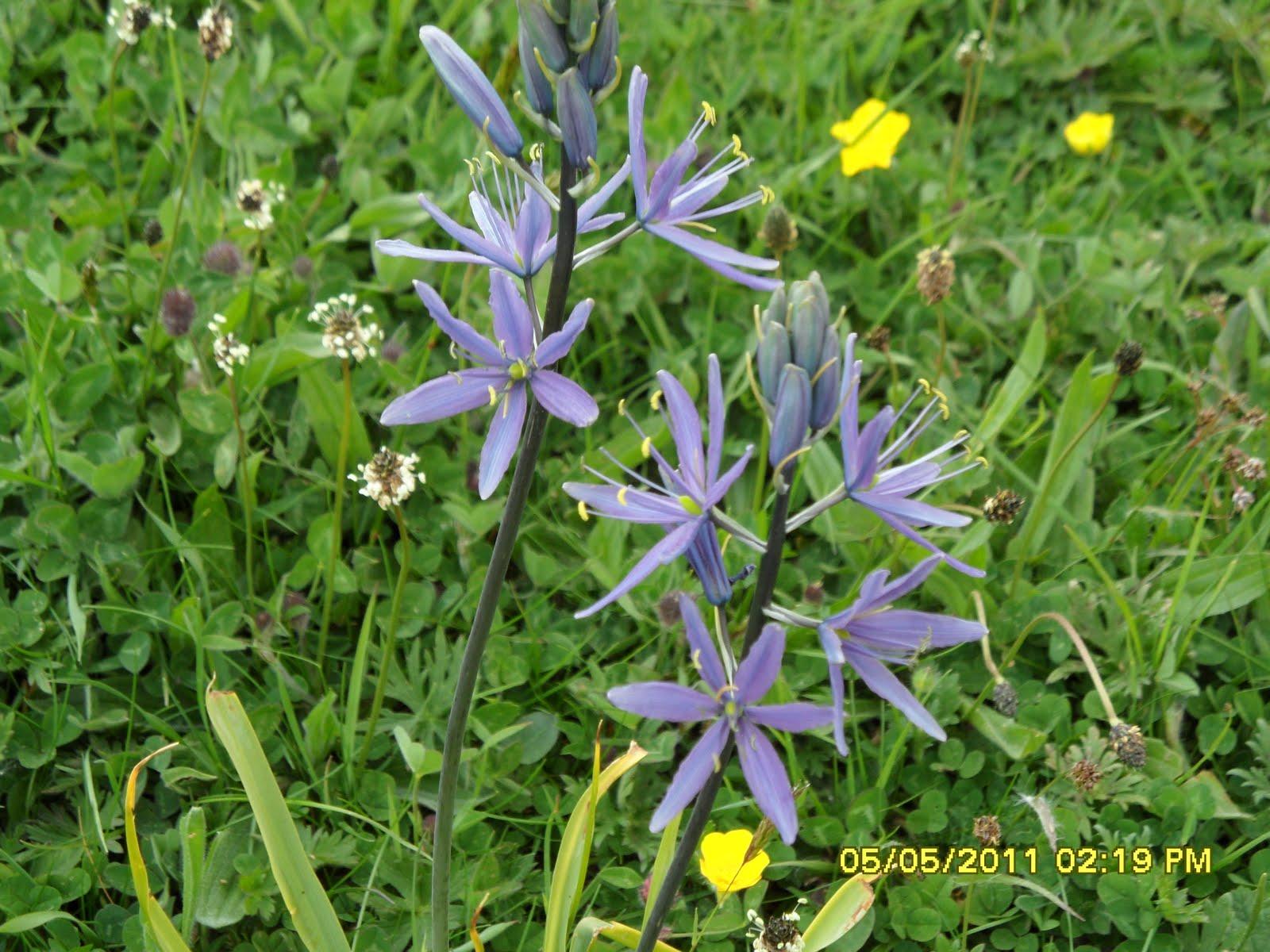 Names of blue flowers list comousar names of blue flowers list name the blue flower izmirmasajfo