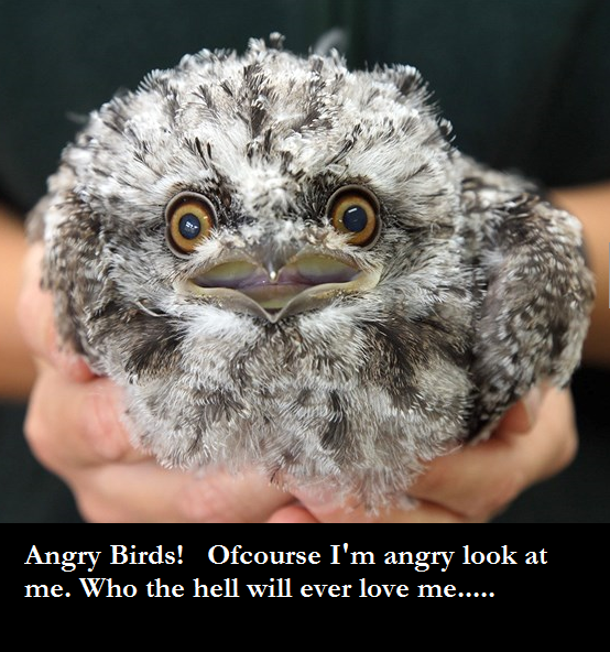 funny angry bird silly image