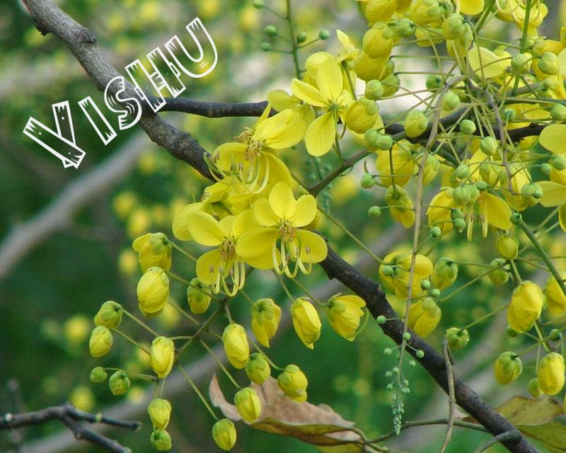 High Defination Happy Vishu Wallpapers, Photo's Images - Festival ...