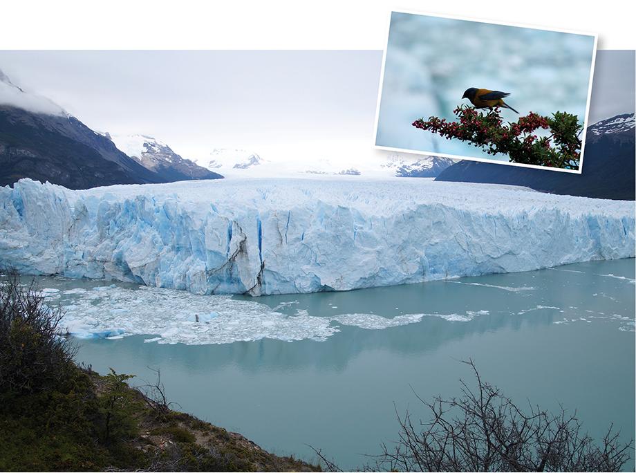 Ynas Reise Blog, Argentinien, Reisetagebuch, Perito Moreno