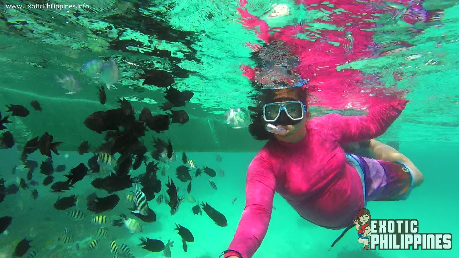 Fish Trip at Malcapuya Island Coron Palawan Exotic Philippines Travel Blog Blogger