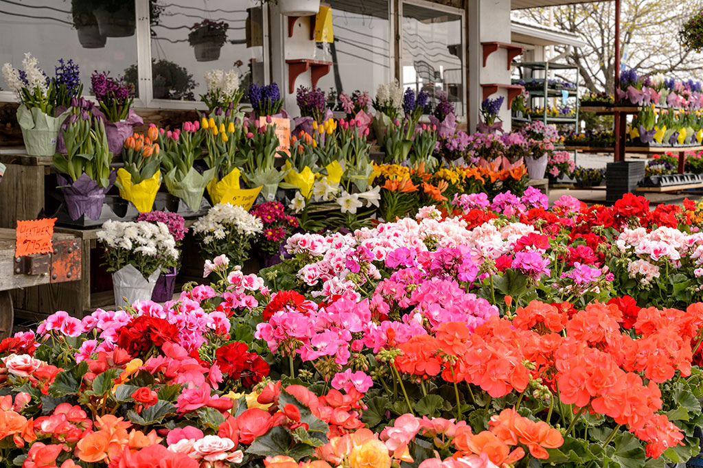 Spring flowers at C & R Produce