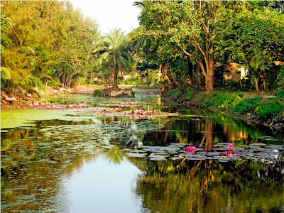 Jadavpur University: Greenery
