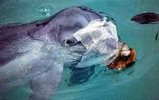 especies-marinas-mueren-bolsas-platicas