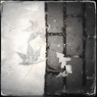 ghost, leaves, stains, photography, fall, ephemeral, temporary, progressive moments, art practice, walking
