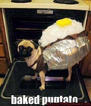 Cute Dog Halloween Costume - Potato Costume
