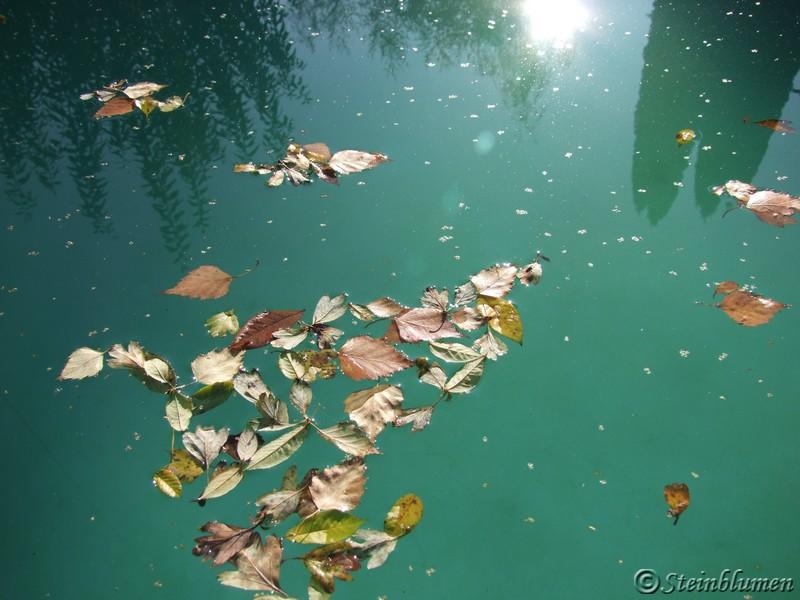 Blätter im Pool