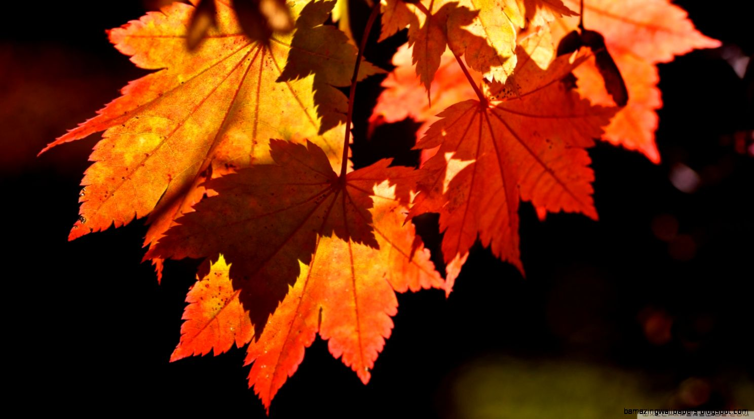 Autumn Leaves HD desktop wallpaper  High Definition  Fullscreen
